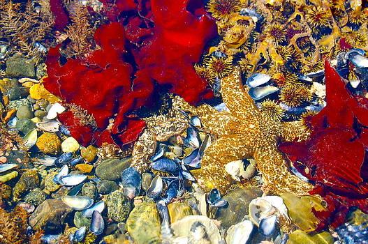 Sea Beauty by Judy Barrera
