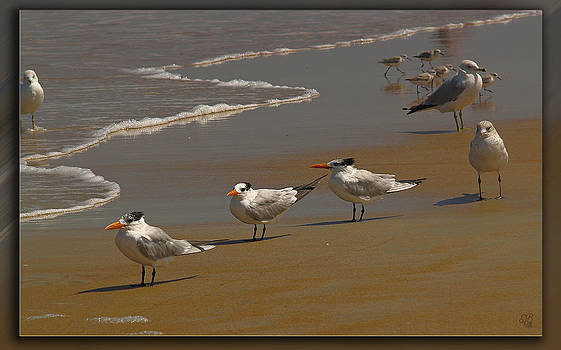 Sand and Sea Birds by Barbara Middleton