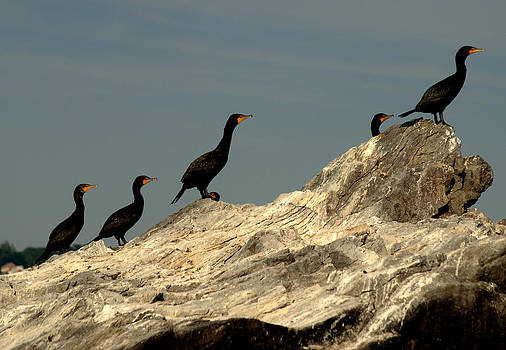 Sea Birds On A Rock. by Luis Baez
