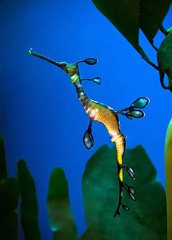 Sea Dragon by Anna Rumiantseva