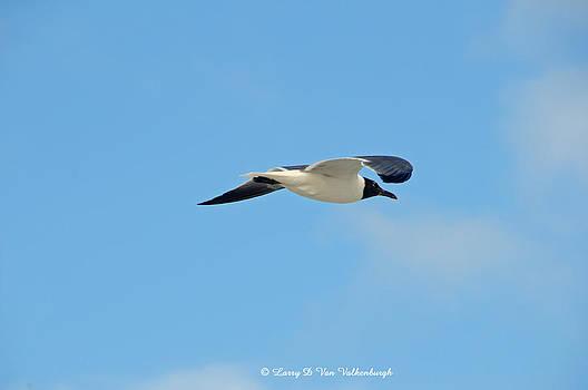 Sea Gull by Larry Van Valkenburgh