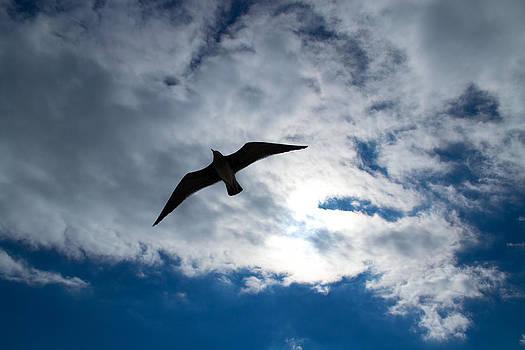 Mike Shaw - Sea Gull