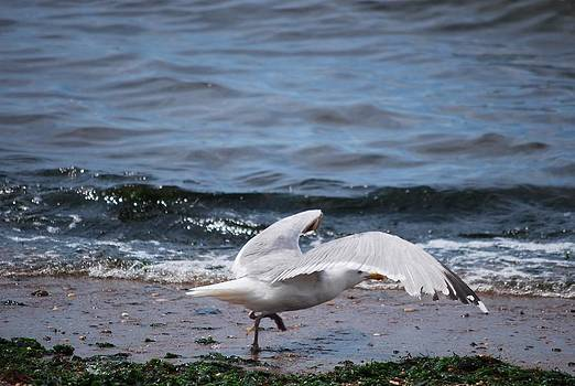 Michelle Cruz - Sea Gull Ready for Take Off