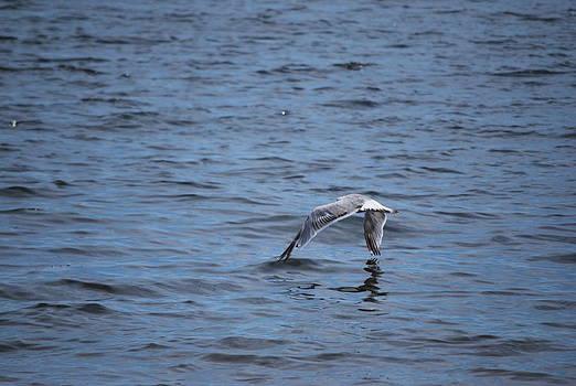 Michelle Cruz - Sea Gull Touch Down
