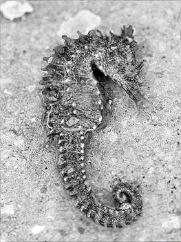 Sea Horse BlackWhite by Jenny Ellen Photography
