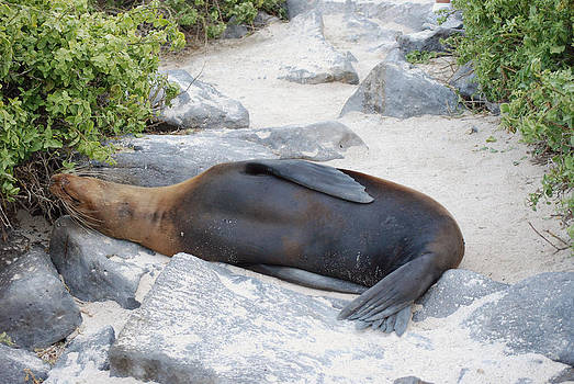 Harvey Barrison - Sea Lion Detour