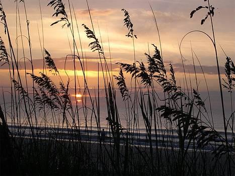 Sea Oat Sunrise - Golden Mile by Kathleen Palermo