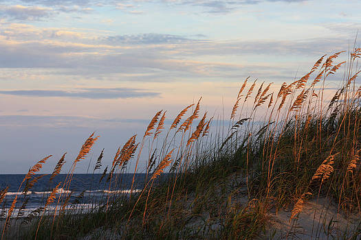 Sea Oats Blowing In The Wind by Kim Galluzzo Wozniak