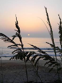 Christy Usilton - Sea Oats Greet The Sun 3