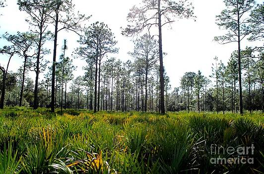 Sea of Palmettos by Theresa Willingham