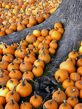 Sea of Pumpkins by Sandi OReilly