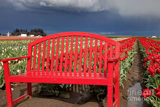 Sea of Red in the Storm by Bruce Smalley