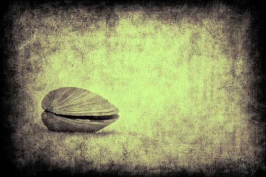 Sea Saw Shell by Dmitriy Mirochnik