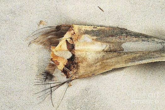 Stephen Mitchell - Sea Scarf