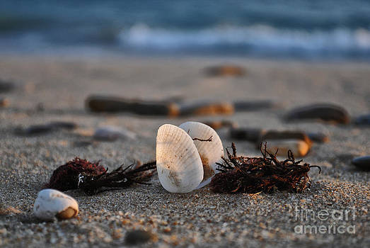 Sea shell by Slavi Begov