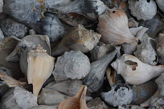 Sea Shells by the Sea shore  by Glenn Lawrence