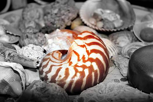 Sea Shells by Sonja Bonitto