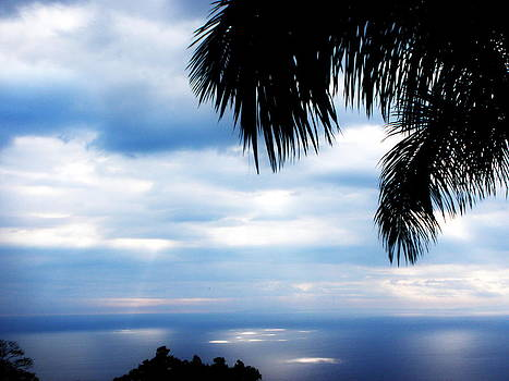 Sea sky and palm tree by Rosvin Des Bouillons