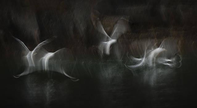 Sea Spirits by Andy Astbury