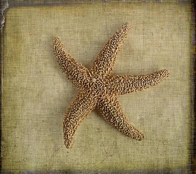 Sea Star by Cindi Ressler