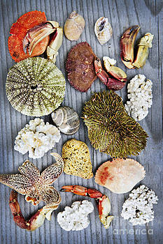 Elena Elisseeva - Sea treasures