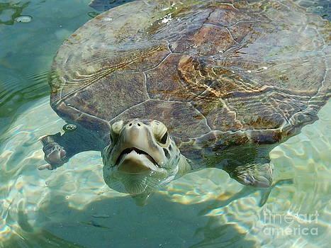 Sea Turtle by Bill Dinkins