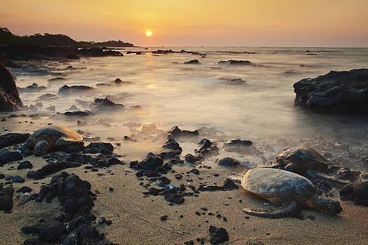 Sea Turtle Sunset by Nolan Nitschke