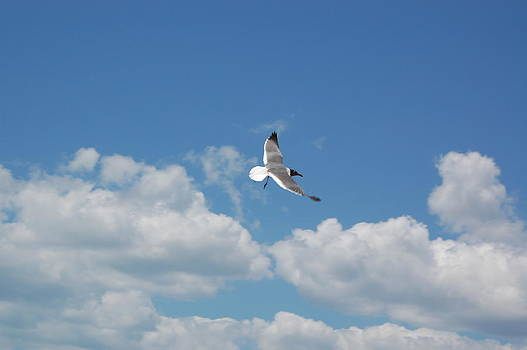 Seagull 2 by Paul Thomley