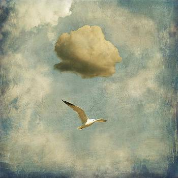 Seagull and cloud by Sonya Kanelstrand
