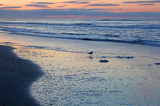 Seagull at Sunrise by Rick Catizone