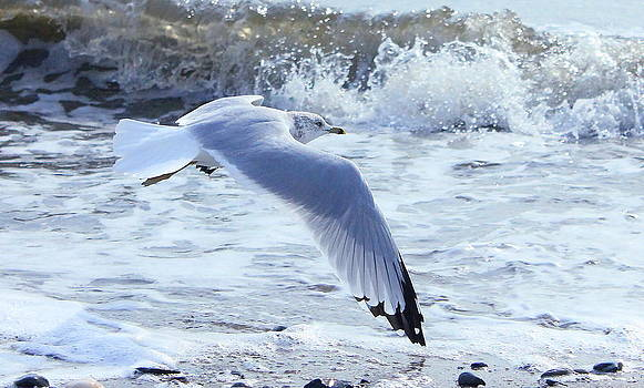 Seagull at the Shore by Cathy Leite Photography