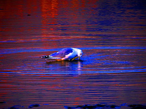 Seagull Bathing in Dramatic Light by Catherine Natalia  Roche