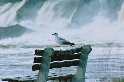 Seagull falls by Brian Beller