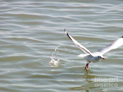 Seagull by Hemangi Koticha