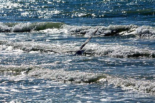 Danielle Groenen - Seagull in Flight