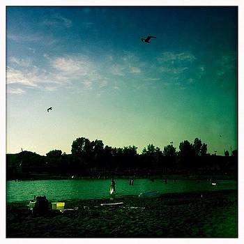 #seagull #lake #nature #iphoneonly by Ange Exile DuParadis