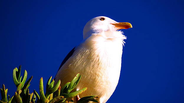 Seagull on Top by Catherine Natalia  Roche