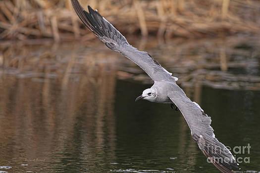 Deborah Benoit - Seagull Seagull On The Move