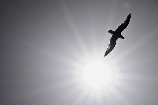 Seagull Wing Touches the Sun by Jeramie Curtice