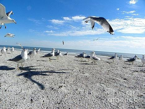 Seagulls by Ashleigh Windham