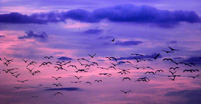 Christy Usilton - Seagulls at Dusk