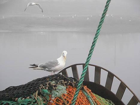 Daryl Macintyre - Seagulls