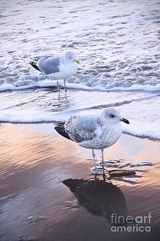 LHJB Photography - Seagulls