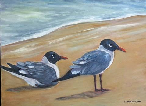 Seagulls by John Cummings