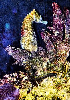 Anne Ferguson - Seahorse in coral