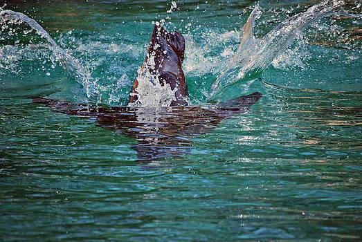 Michelle Cruz - Seal Dive