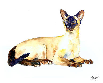 Christy  Freeman - Seal Point Siamese Cat old