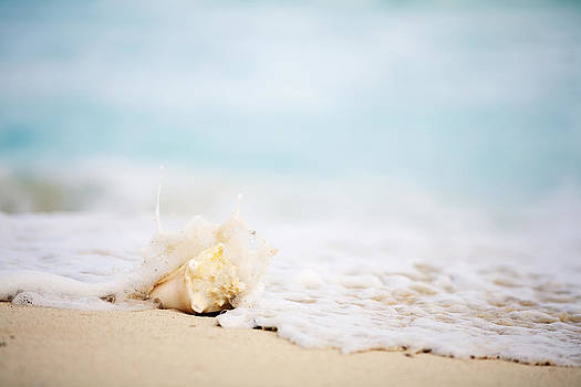 Seashell by the Shore by Jama Pantel
