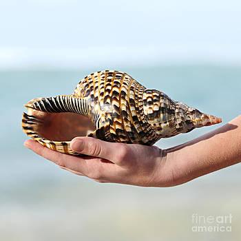 Elena Elisseeva - Seashell in hand