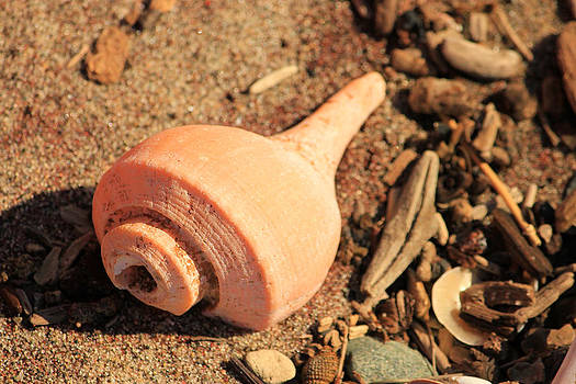Seashell in the Sand by Cathy Leite Photography